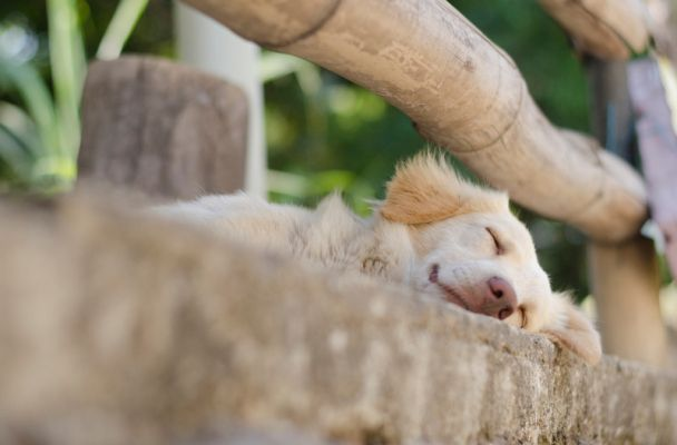 En Taganga habitan mas de 1.500 perros y gatos, y mas del 70% de estos animales no tienen un responsable. Foto: Fundación Gaia