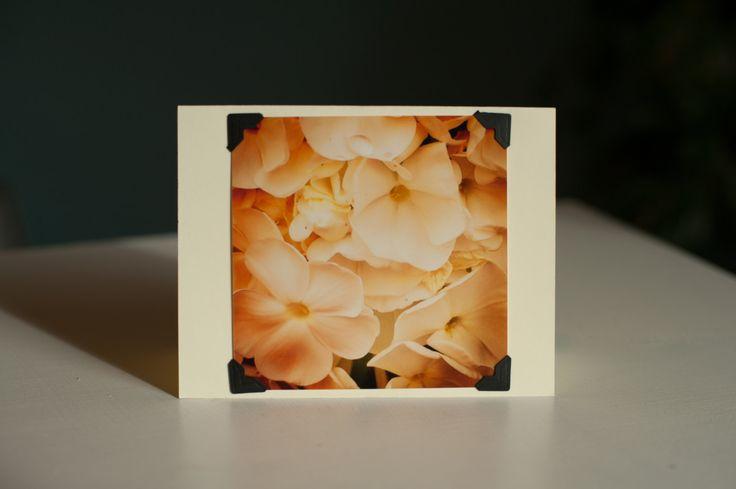 White Flower Card - Phlox Card - Blank Notecard - Greeting Card - Photo Note Card - Photo Card - Blank Card - Floral Card - Stationery Set by FenimoreRutland on Etsy
