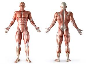 Bra guide! Vilka muskler tränar man under ett spinningpass? --> http://wolber.se/vilka-muskler-tranar-spinningpass/