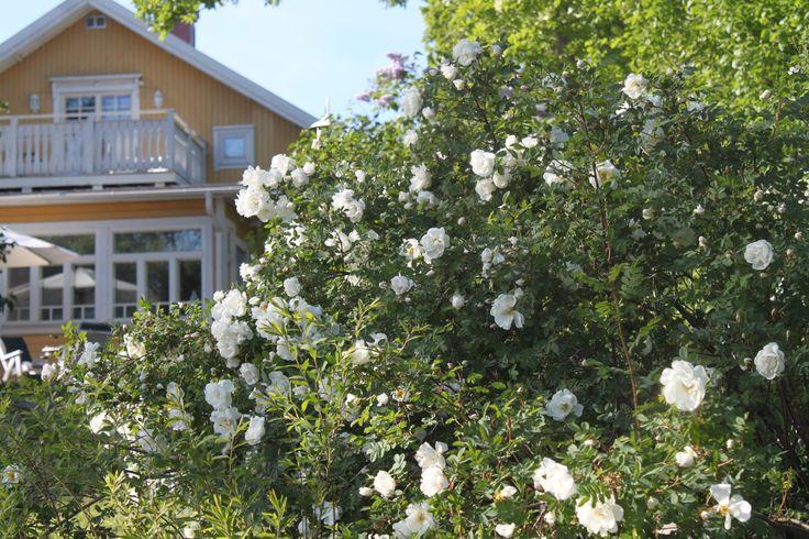 Maiju Finland, kotona