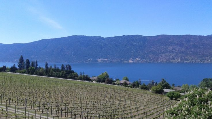 view from Gray Monk winery #vineyard #vine #Okanagan