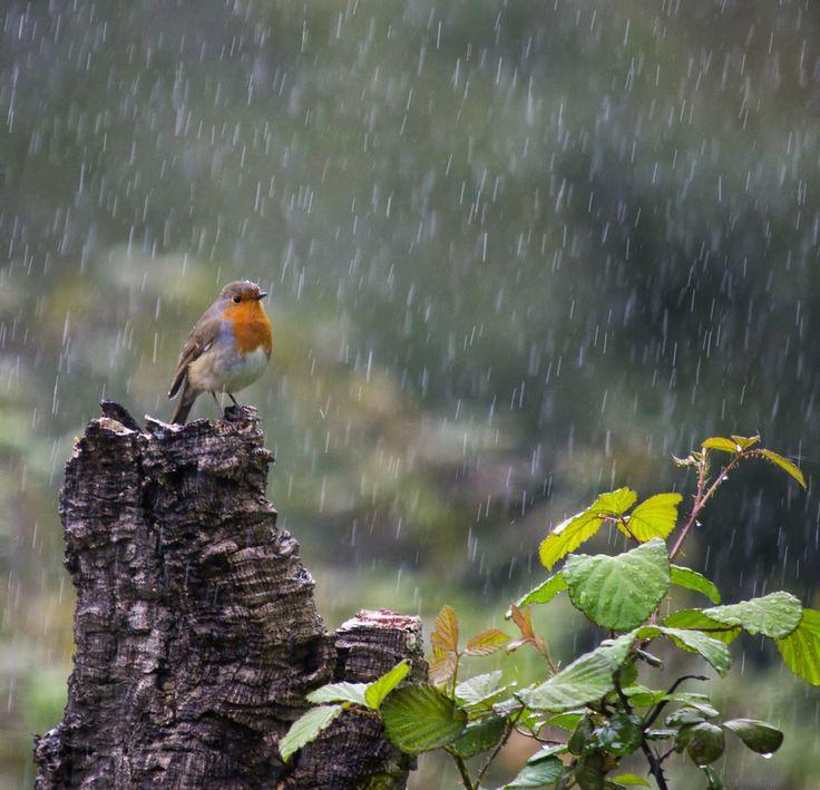 """""""Siempre me ha sorprendido porqué los pájaros se quedan en el mismo lugar cuando pueden volar a cualquier lugar de la tierra. Entonces me hago la misma pregunta"""""""