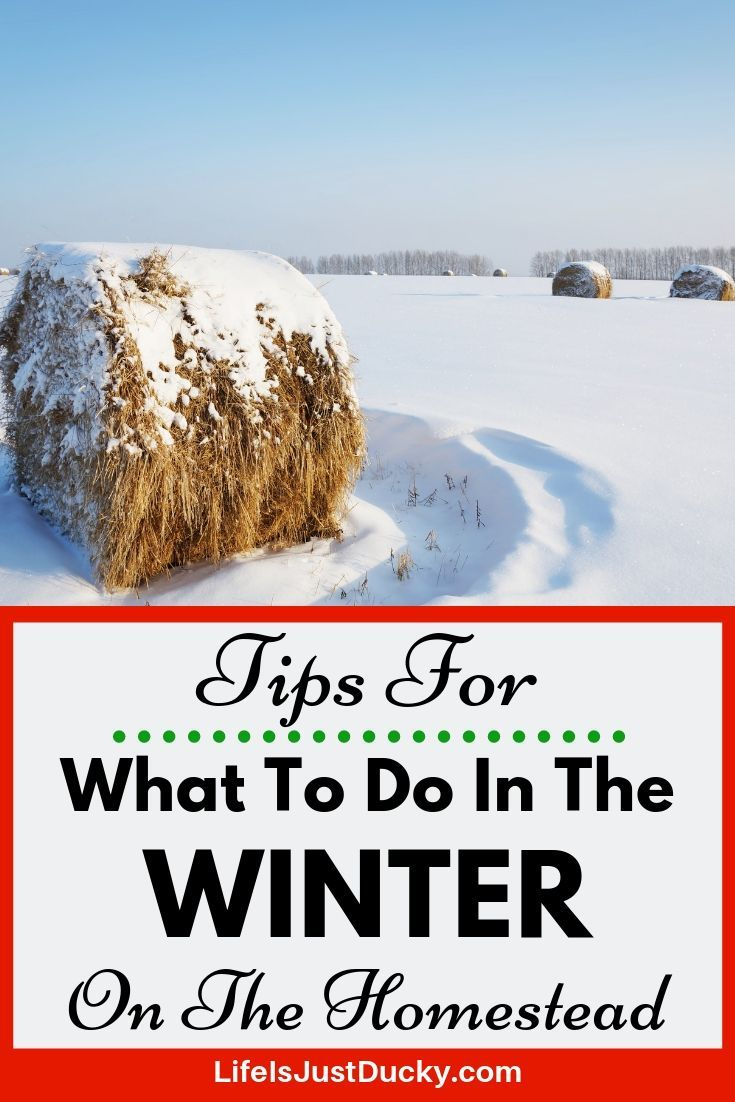 8bde5dffbdb08d2004f7288e0acad79e - What Can Gardeners Do In Winter