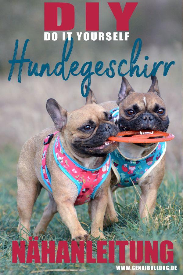 DIY Nähanleitung für Hundegeschirr auf www.genkibulldog.de
