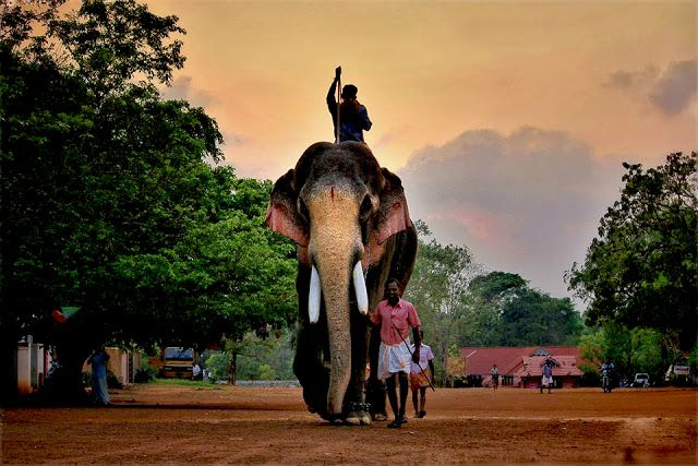 Thechikottukavu Ramachandran Hd Photos Elephants Photos