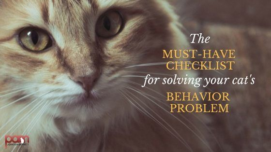 the must-have checklist for solving your cat's behavior problem