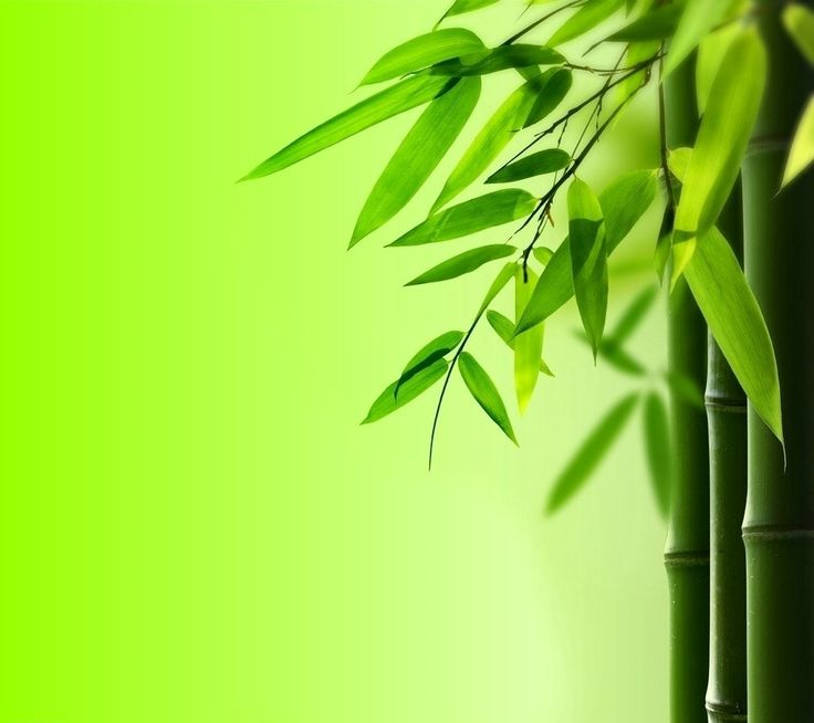 The scientist have proven that the bamboo vinegar own very excellent effects to promote hair growth.