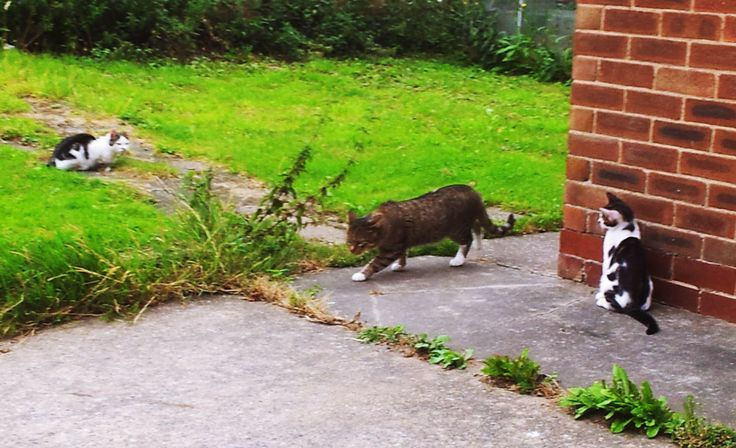 young stray kitties and pimpus sep 2013