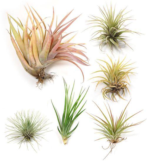 air plants mmmmm: House Plants, Gardens Outside Joy, Flower Flow, Air Plants, Gardens Patio, Gardens Dig, Flower Idea, Gardens Flow, Gardens Thyme