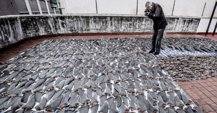 Louis Psihoyos' new film, Racing Extinction, airing December 2 on Discovery, explores the man-made causes of what biologists call the sixth mass extinction.