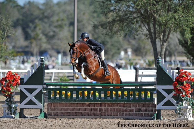 Redfield Farm's Fandango HX and Cassandra Kahle in the First Year Green Hunters in Ocala 2016
