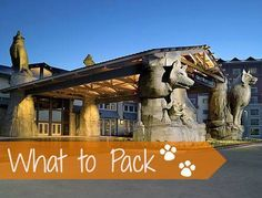 What to Pack for Great Wolf Lodge:Travel Tips Tuesday