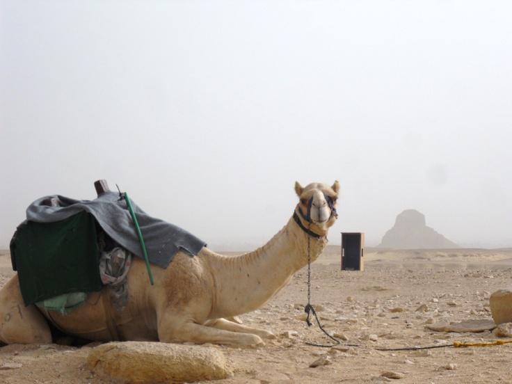 Arturo ... the camel