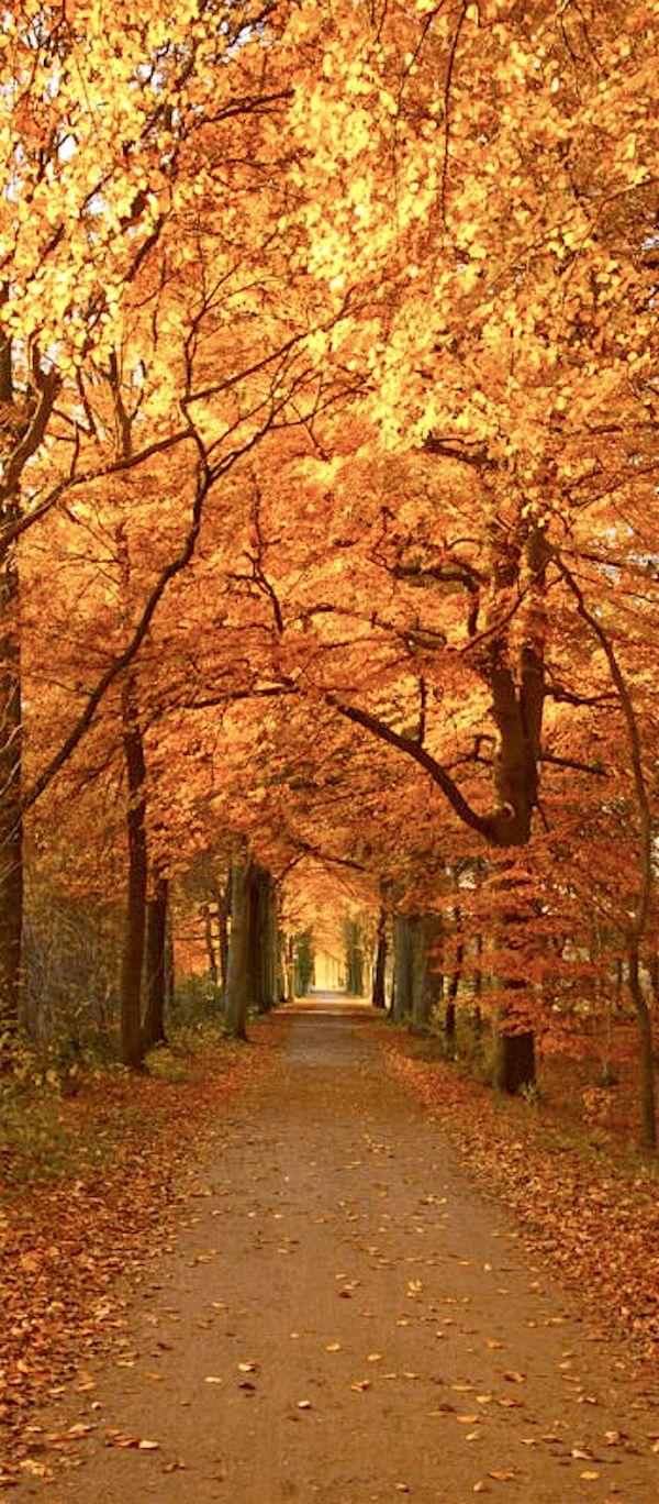 "~ Autumn ~  "". . . flings her fiery cloak over the sumac, beech and oak."" ~ Susan Lendroth"
