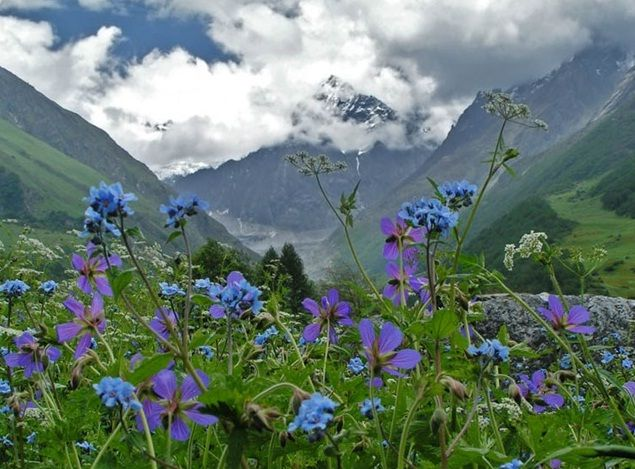 Valley of Flowers in the Himalayas, India