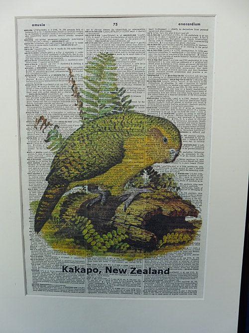 Kakapo Bird Dictionary Wall Art Print kakapo by DecorisDesigns