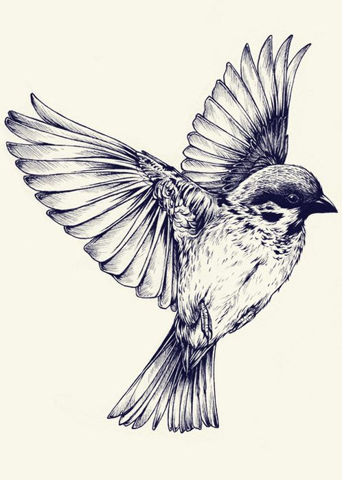Very detailed sparrow drawing