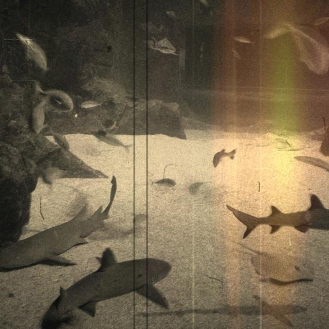 Aquarium with #shark #ray #fish: Sharks Ray, Ray Fish