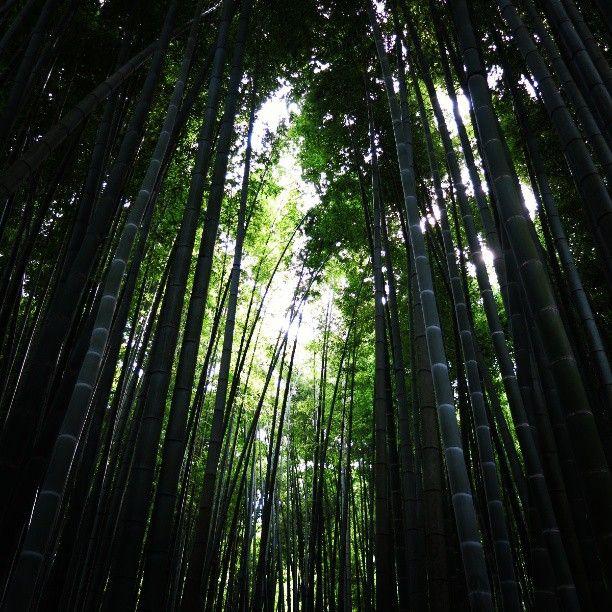 Lots of bamboos in Kamakura. 鎌倉駅からバスで10分の、報国寺。涼しい境内で竹林ときれいな苔に圧倒されました。秋は紅葉、初夏はあじさい、見所がいつもありそうな場所。