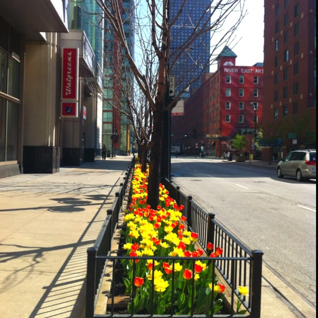 Spring in chicago downtown on illinois and columbus for Columbus spring