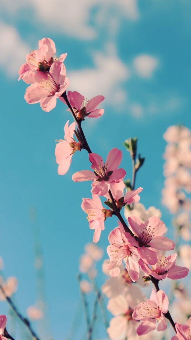 Bildergebnis Fur Hintergrundbilder Kostenlos Fruhling Spring Flowers Photography Spring Flowers Wallpaper Sunflower Wallpaper