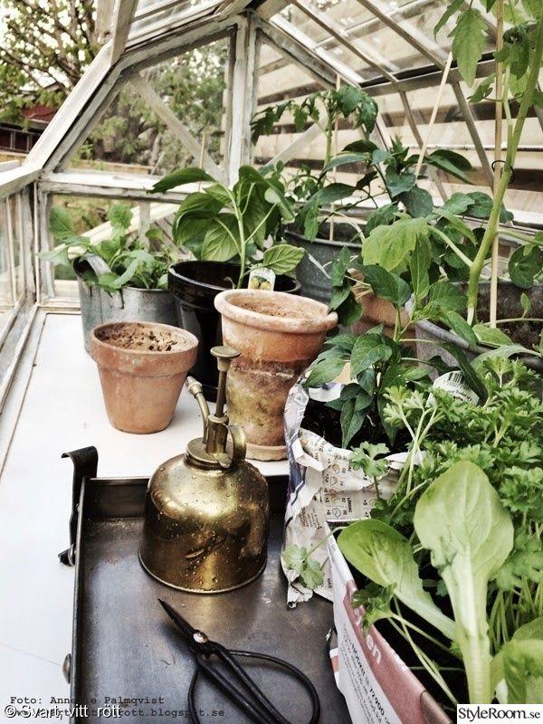 krukor,odla,tomatplantor,växthus,gurka