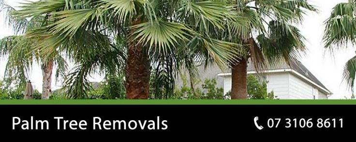 Palm Tree Removal & Cleaning