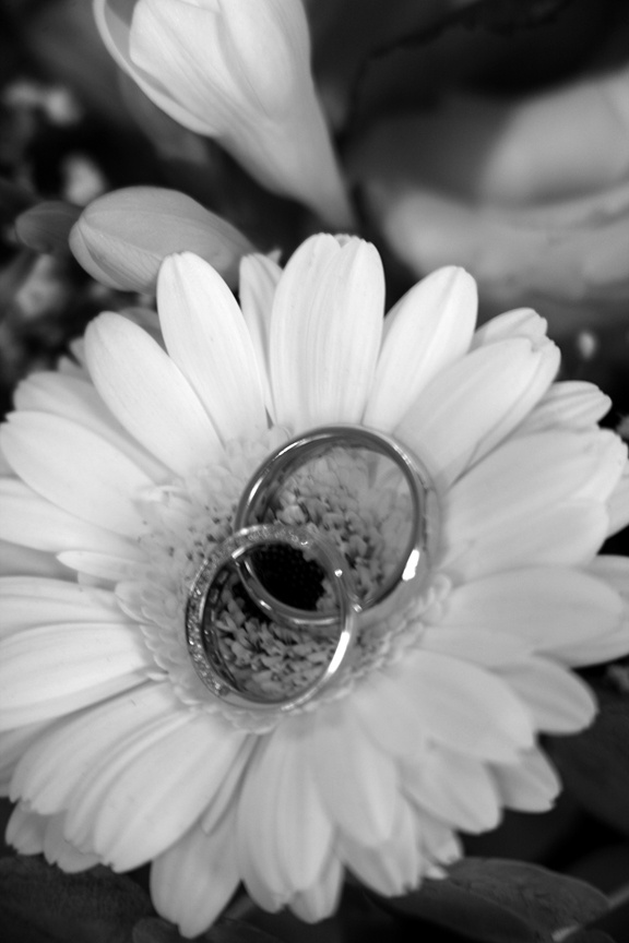 Black and white photo of wedding rings on daisy