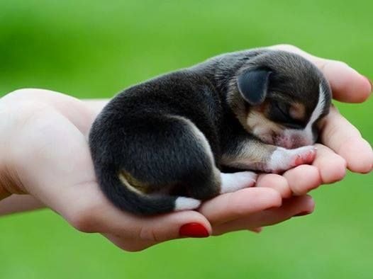 Image result for cute pictures of puppies