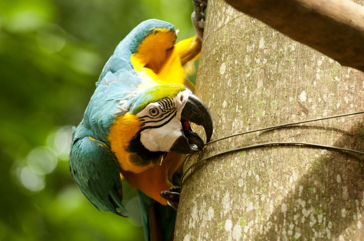 One of El Refugio's many macaws.