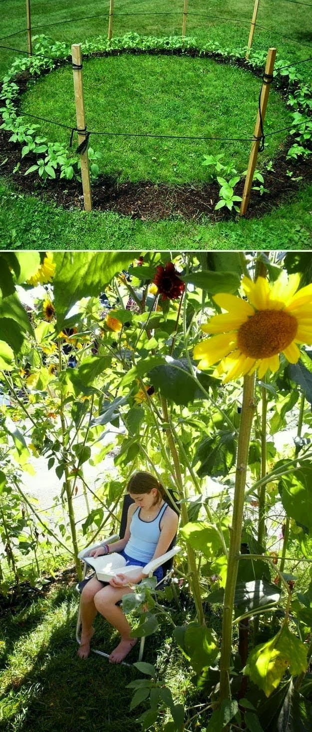 Playing garden drawing for kids - Grow A Sunflower House For The Kids To Play In 31 Cheap And