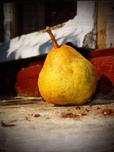 Вирощування груші