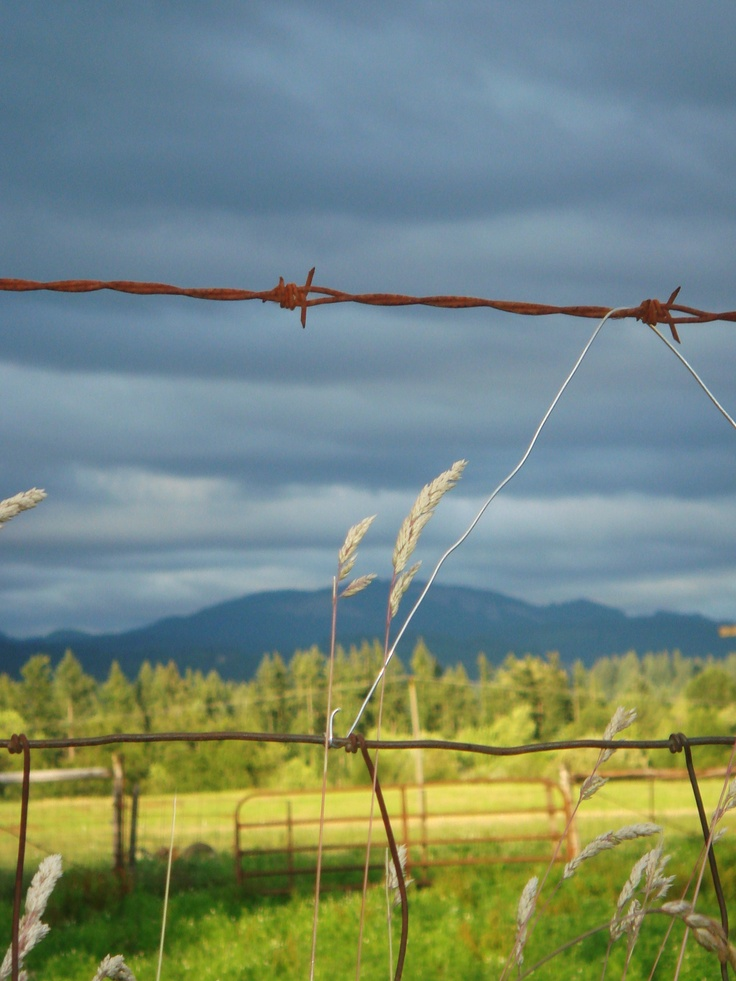 Best 315 BARB WIRE ideas on Pinterest | Res life, Country life and ...