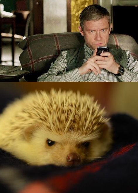 "John Watson & hedgehog. There is literally no difference. <-- That is not the proper use for the word ""literally"". Ugh."