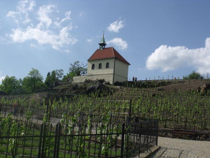 Sv Klara Chapel and vineyard, Troja, Prague