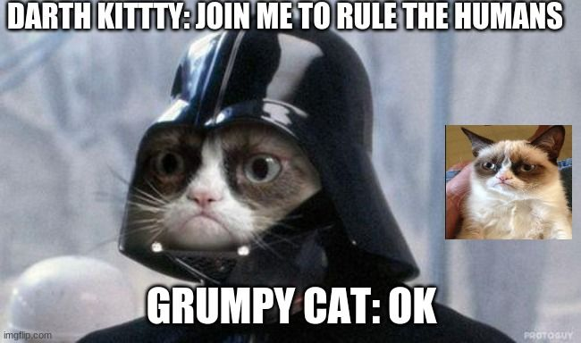 Grumpy Cat Star Wars Cat Birthday Memes Funny Cat Memes Grumpy Cat Humor