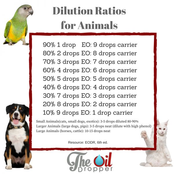 Animal essential oil dilution ratios and safety information for using essential oils on your pets.  Learn about why you should ONLY use Young Living here: http://bit.ly/Oils4Pets