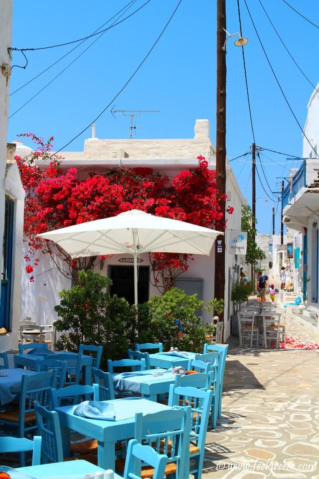 Traditional Greek cafe adorned with red flowers. If you see it once you will never forget it.