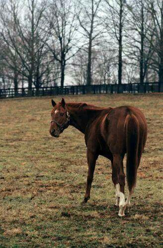 Secretariat   Famous Horses   Pinterest