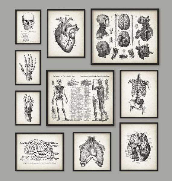 Human Anatomy Antique Art Print Set of 10 - Vintage Anatomy Home Decor - Antique Book Plate - Medical Student Gift Idea Picture Set of 10