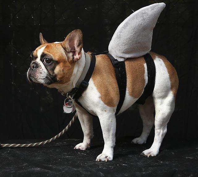 halloween dog parade - Dog Halloween Ideas