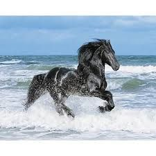 #moodboard #inspiration #black #horse #sea #running #blue #sky #white #wave