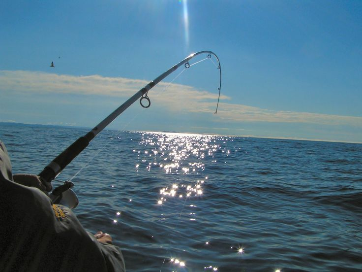 58 best images about pensacola fl on pinterest blue for Best fishing spots in florida