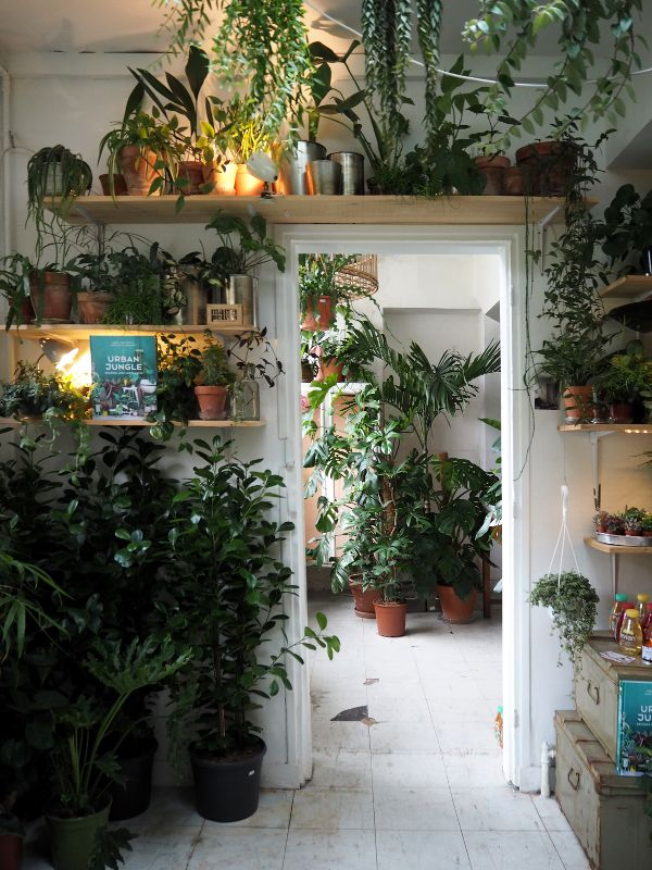 urban jungle plant store in Paris - Mama petula