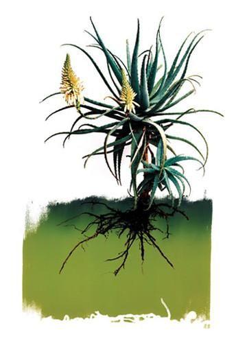 Grafik Botanical 1