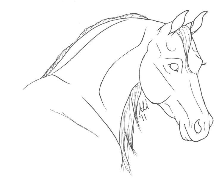 Line Drawing In Qt : Best coloring pages of horses images on pinterest