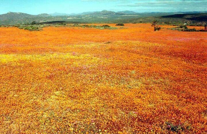 At Skilpad Namaqualand