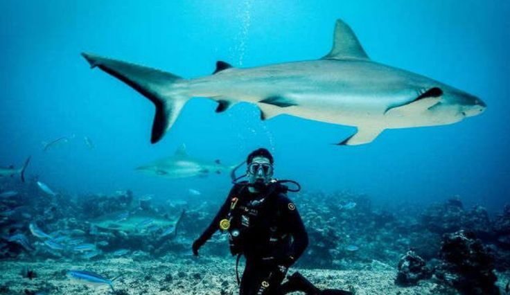 Shark Week 2016: Schedule Updates And A Drinking Game