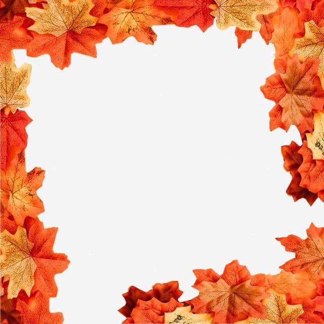 Beautiful Autumn Leaves Border Autumn Fall Season Png Transparent Clipart Image And Psd File For Free Download In 2020 Leaf Border Autumn Leaves Watercolor Autumn Leaves