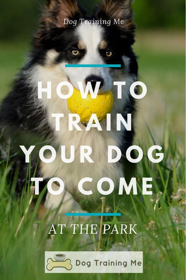 Do You Want To Learn How To Train Your Dog To Come At The Park